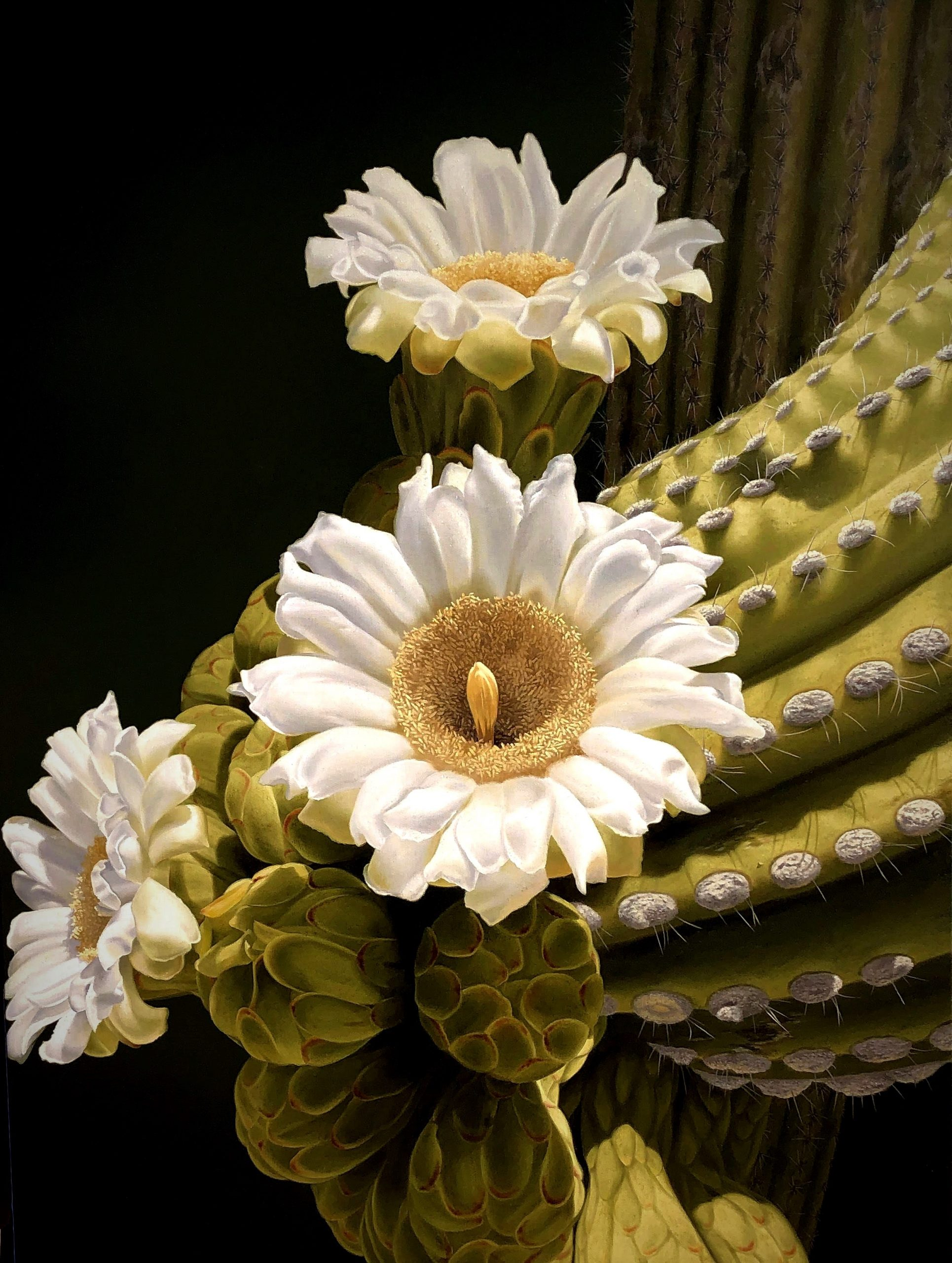 Oil close up of saguaro blooms by artist Rob Macintosh