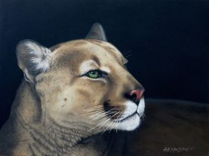 Oil of Mountain Lion by artist Rob Macintosh
