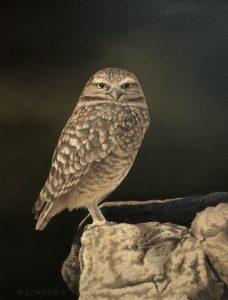 Oil of Burrowing Owl by artist Rob Macintosh